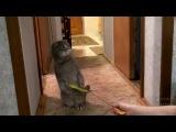 Кот услышай дверной звонок и очень удивился...